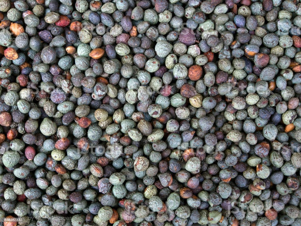 Fruits of Terebinth, Pistacia terebinthus. stock photo