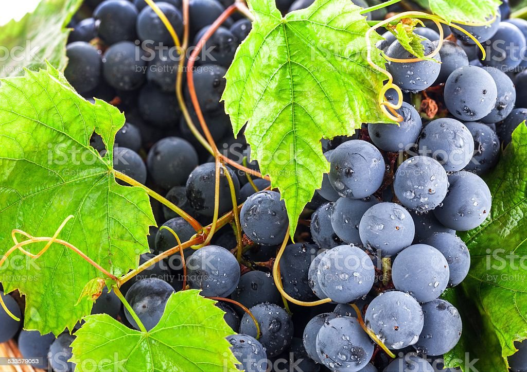 Fruits. At creation of this photo,I was inspired with beauty of the nature. 2015 Stock Photo