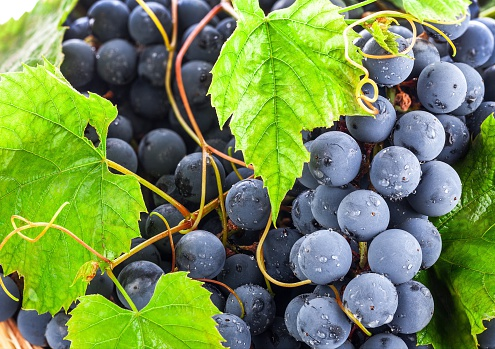Fruits Stock Photo - Download Image Now