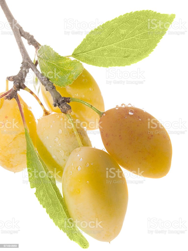 Fruits ripe yellow sweet plums royalty-free stock photo
