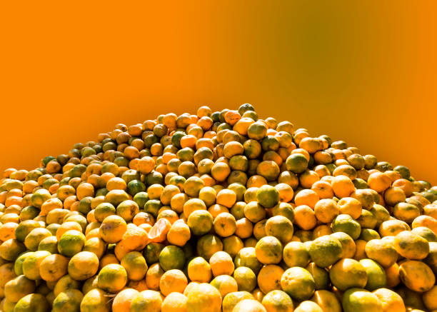 Fruits widely popular in India at Summer Season, which have a great nourishment value during this hot season. stock photo