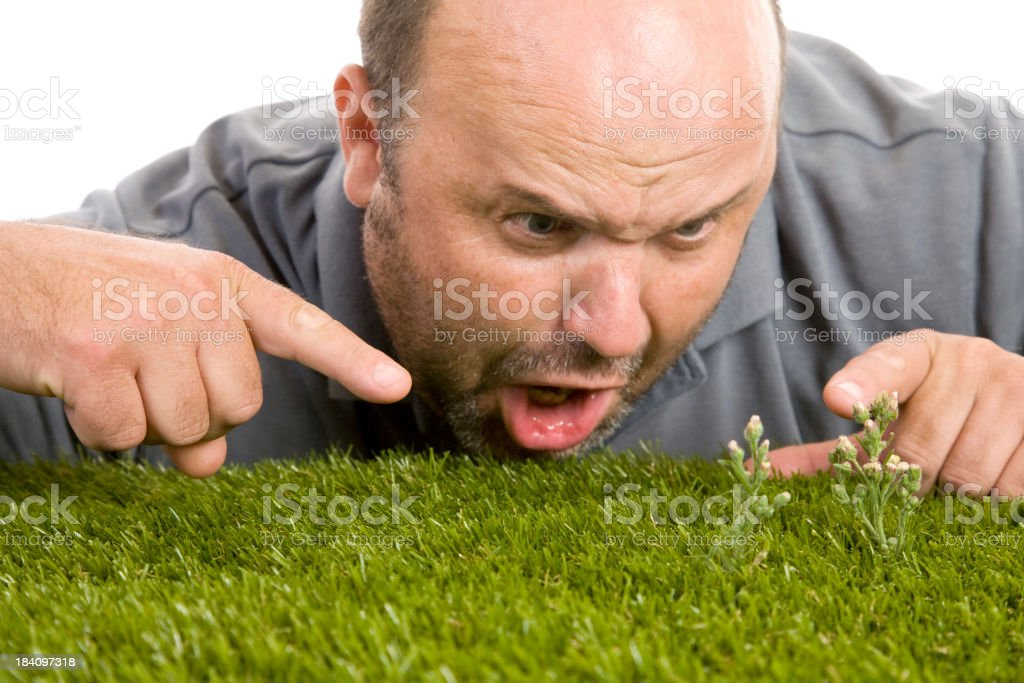 Frustrating Weeds stock photo