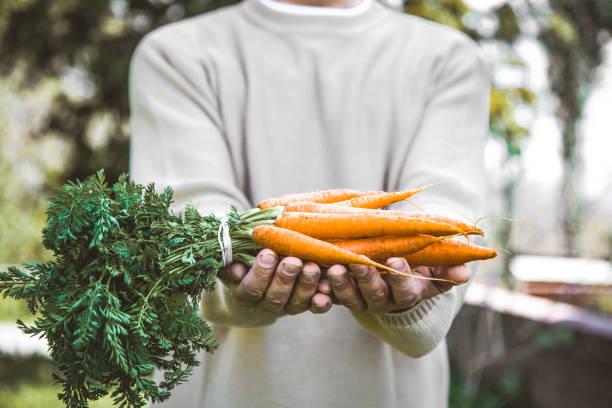Fsrmer avec carottes fraîches - Photo