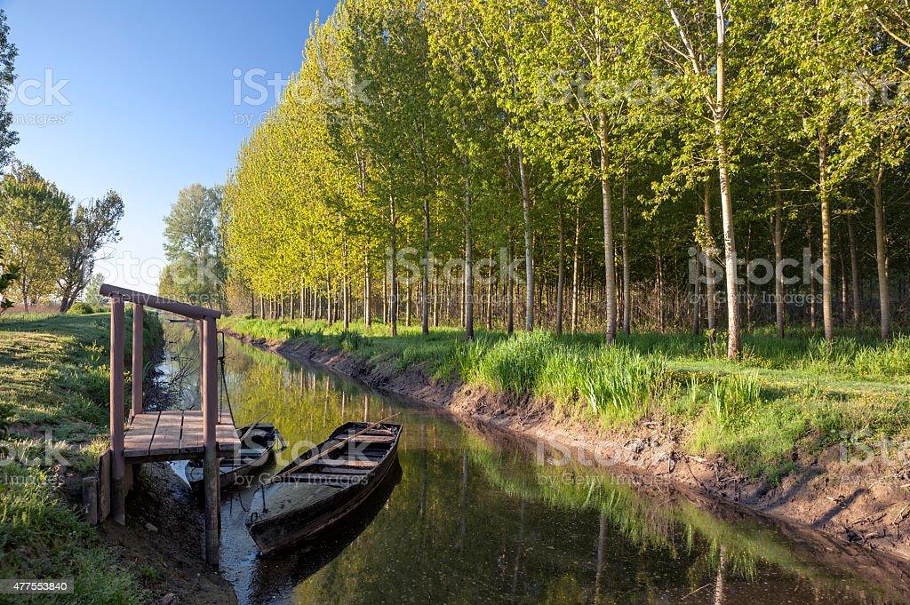 Fucecchio swamp stock photo