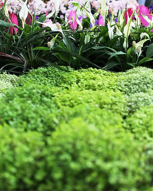 Fiori Con La S.Sfondo Di Fiori Fucsia Con Cupole Verdeggianti Stock Photo