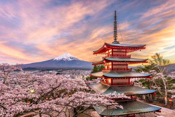 Fuji Japan in Spring Fujiyoshida, Japan at Chureito Pagoda and Mt. Fuji in the spring with cherry blossoms. pagoda stock pictures, royalty-free photos & images