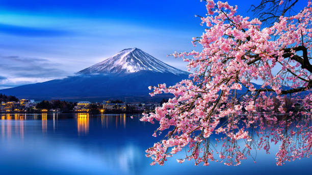Fuji mountain and cherry blossoms in spring, Japan. stock photo