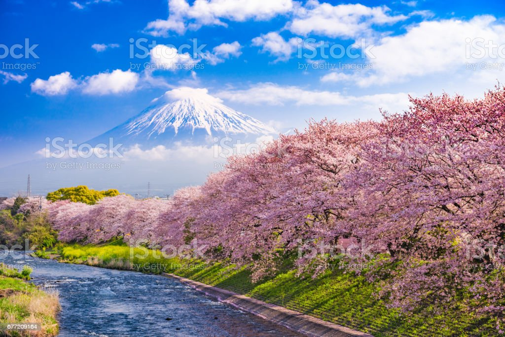 Fuji Mountain in Spring stock photo