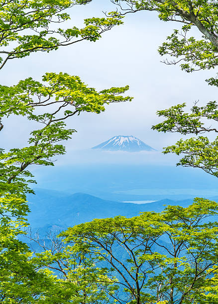 Fuji seen from the west Tanzawa Fuji seen from the west Tanzawa false hellebore stock pictures, royalty-free photos & images