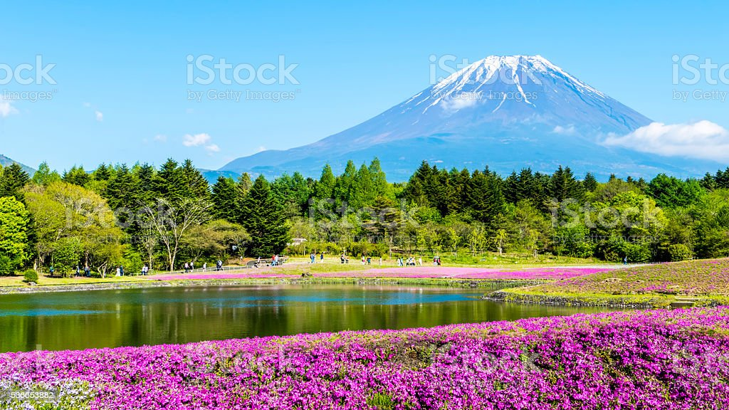Fuji with the field of pink moss at Shibazakura festival stock photo