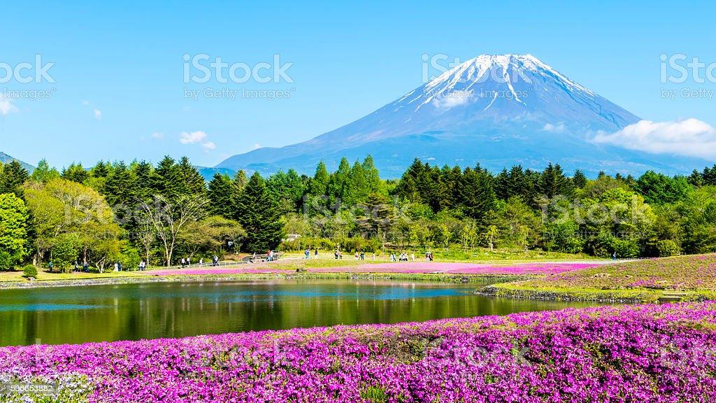 Fuji with the field of pink moss at Shibazakura festival stock photo