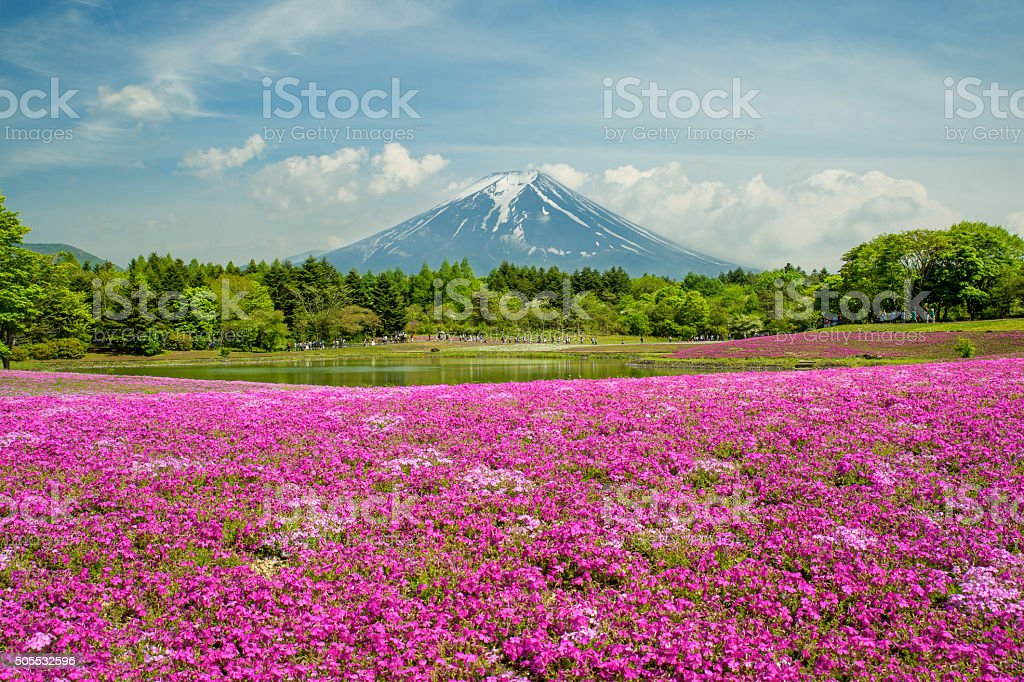 Fuji with the field of pink moss at Yamanashi, Japan stock photo