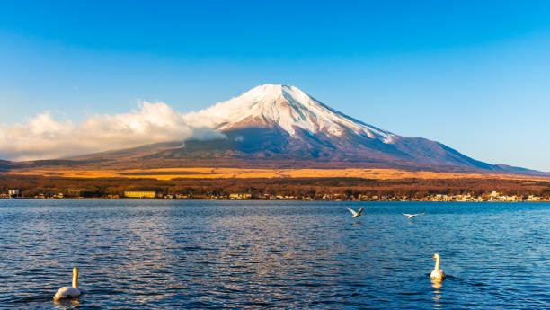 山梨県山中湖で白鳥と日の出の光を浴びる富士山や富士山。 - yamanaka lake ストックフォトと画像