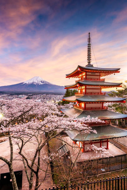 Fujiyoshida, Japan at Chureito Pagoda and Mt. Fuji in the spring with cherry blossoms. stock photo