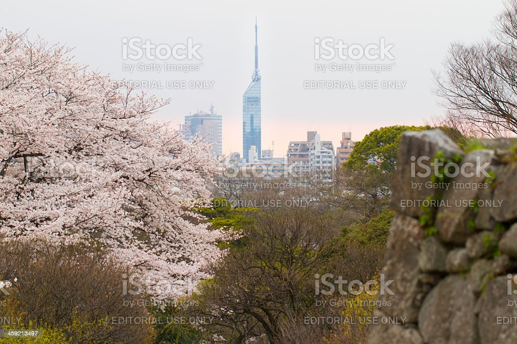 Fukuoka Tower, Cherry Blossoms, and Castle Ruins stock photo