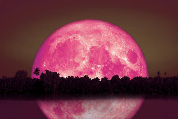 full Beaver Moon back on silhouette tree and reflection on river and night sky stock photo