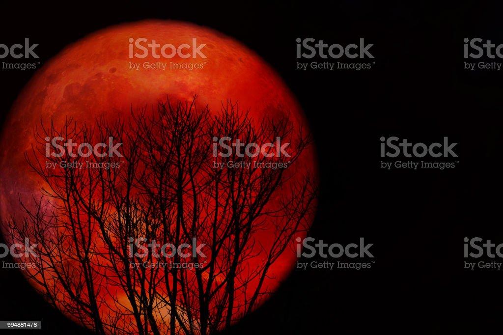 voll Blutmond zurück Silhouette Dürren ast baum – Foto