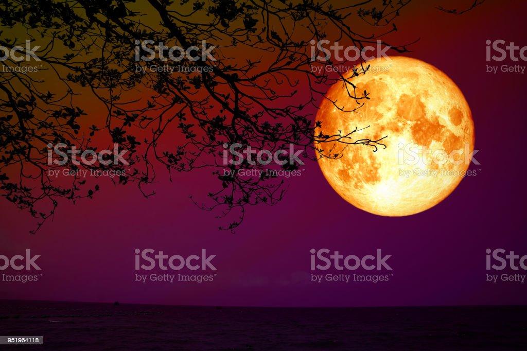 voll Blut Mond zurück Silhouette Trocknen Baum Nacht Himmel Meer – Foto
