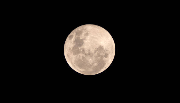 vollblut-mond in der dunklen nacht - englisches vollblut stock-fotos und bilder