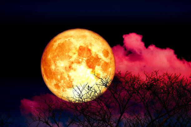 Full blood strawberry moon back cloud and tree in the field and dark red sky, Elements of this image furnished by NASA stock photo