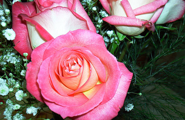 Full Bloom stock photo