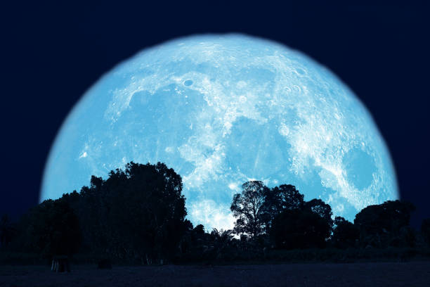 full buck moon on night sky back over silhouette forest stock photo