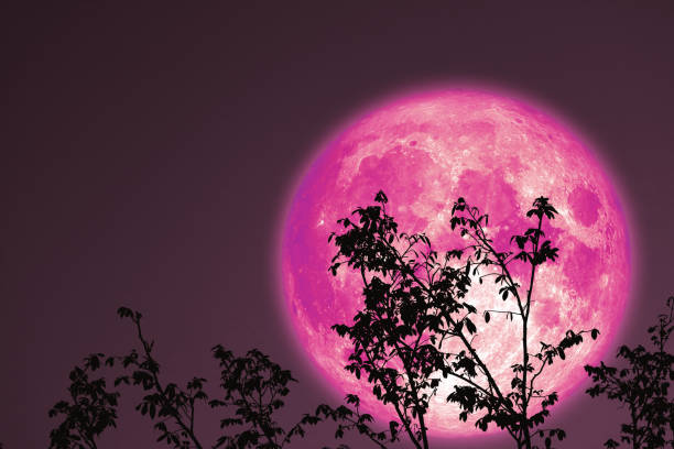 full cold moon on night sky plant and tree stock photo