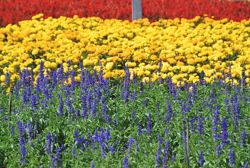 Full Frame Background Of Colorful Flower Field Stock Photo & More Pictures of Agricultural Field