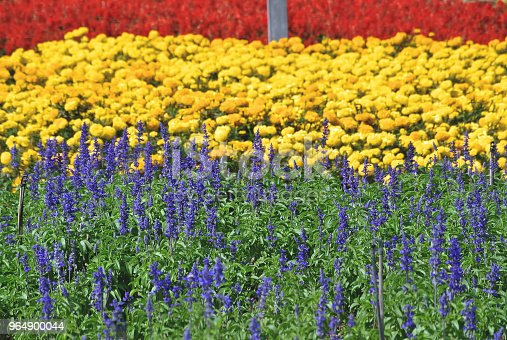 Full Frame Background Of Colorful Flower Field Stock Photo & More Pictures of Beauty