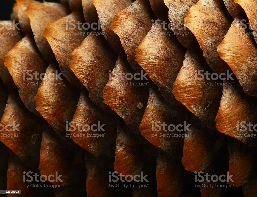 full frame macro of a cone royalty-free stock photo