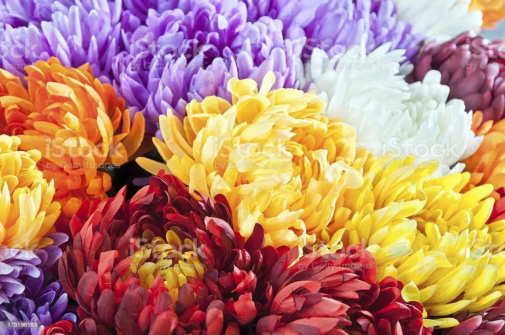 Full frame multicolor flower background - bouquet of Chrysanthemum royalty-free stock photo