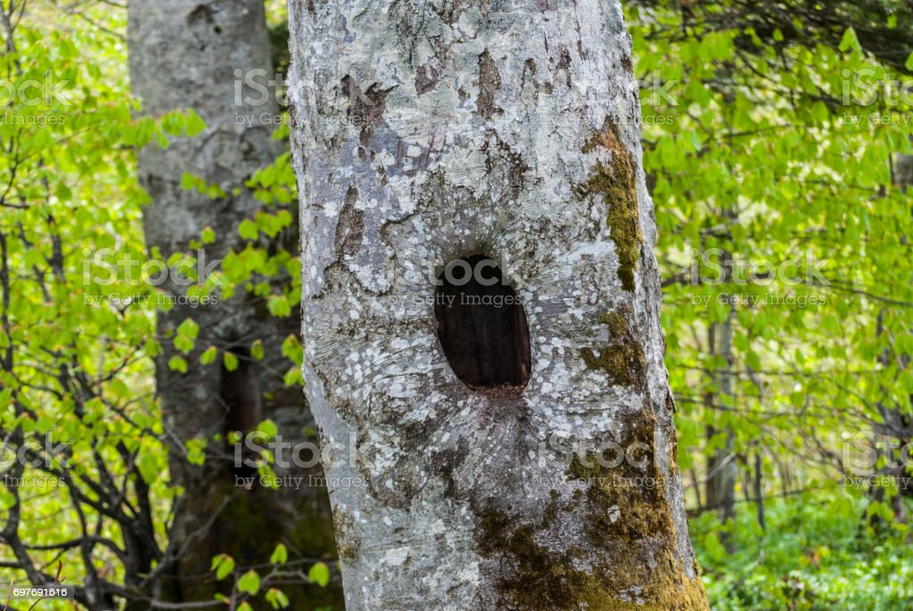 Full frame natural abstract bark detail in green forest stock photo