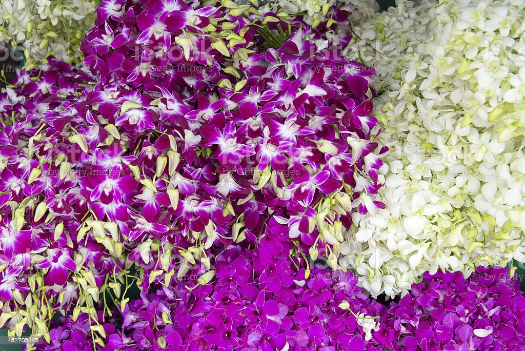 Full Frame Orchid Flowers royalty-free stock photo