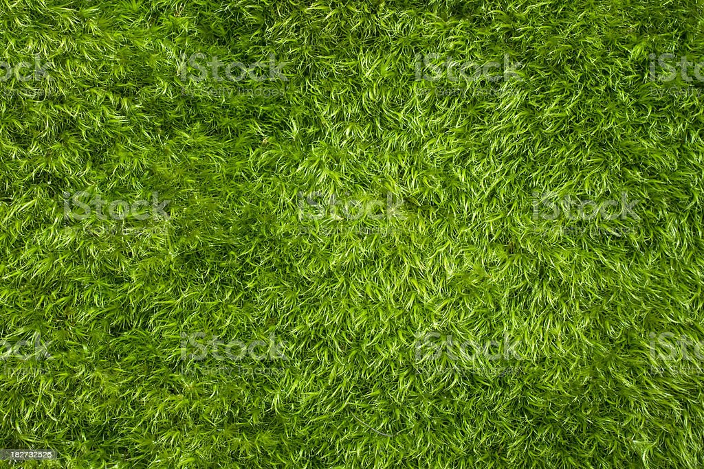 Full Frame Prefect Soft Fuzzy Green Moss stock photo