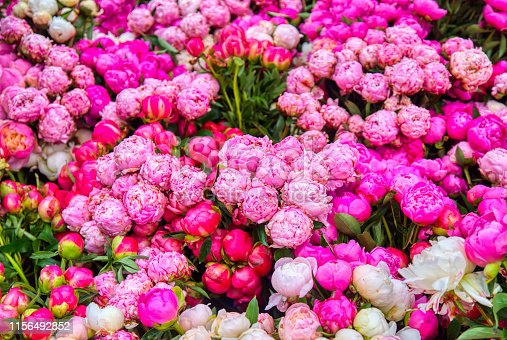 red pink and white peonies at the farmer's market