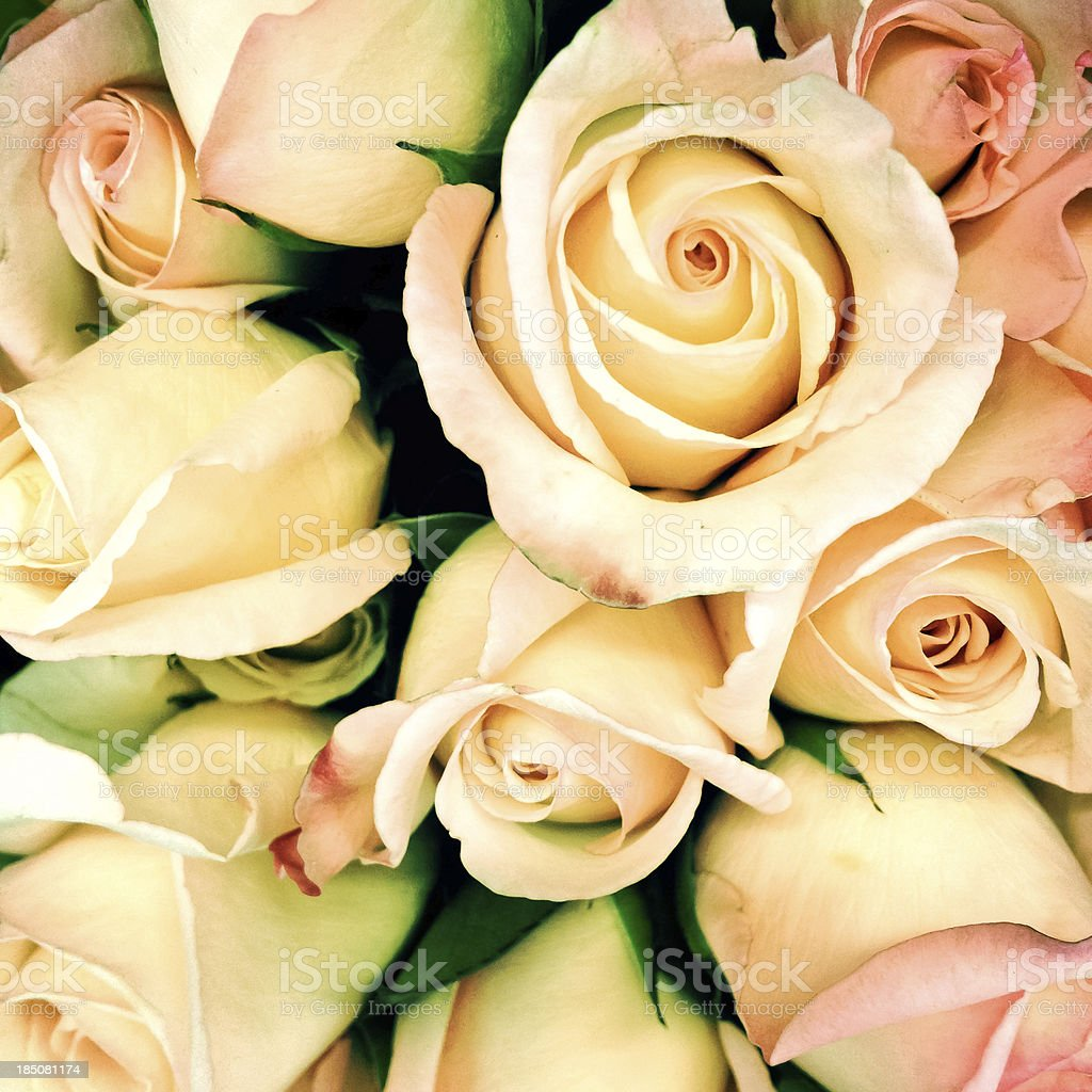 Full frame rose bouquet vintage style - cross processed royalty-free stock photo