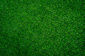 Full frame shot of grass texture background.