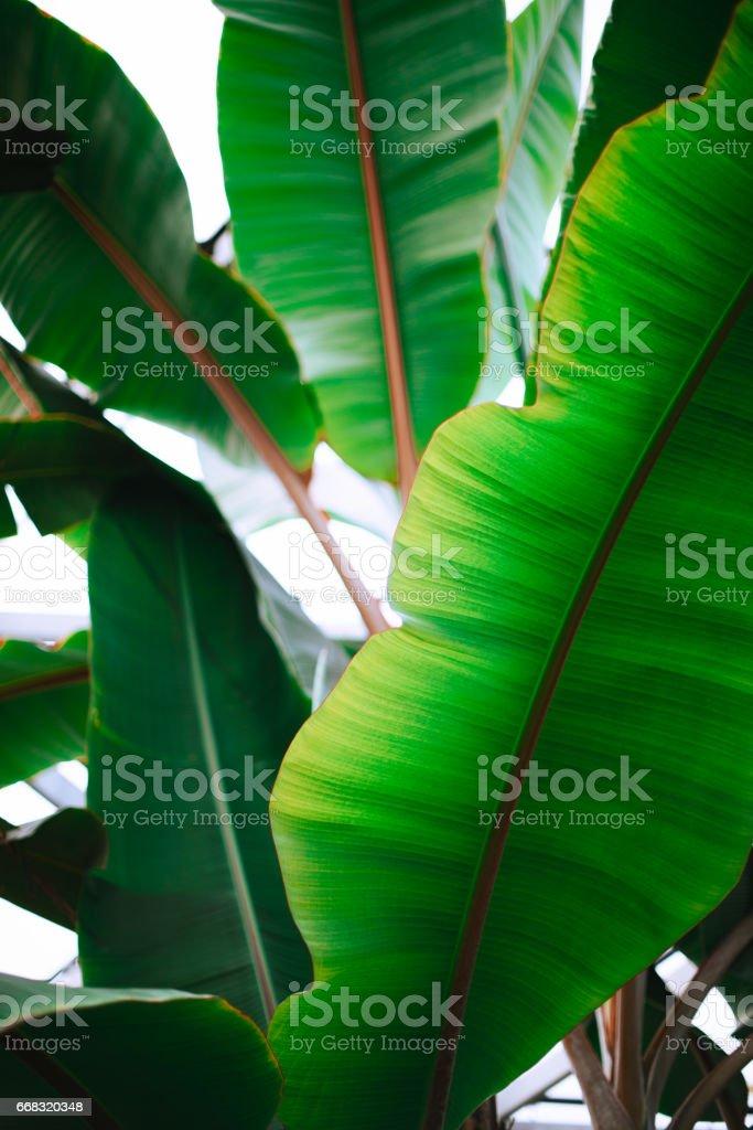 Full Frame Shot of Green Leaves stock photo