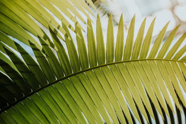 Full-Frame-Schuss von Palm Leaf – Foto