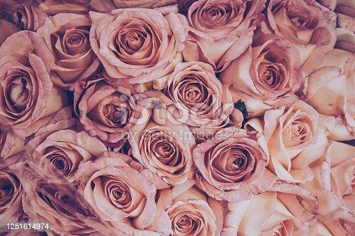 Full Frame Shot of Roses , Bangkok Province, Thailand, Asia