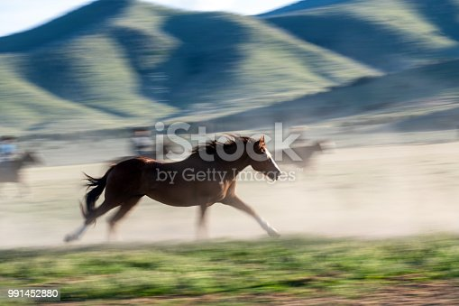 Wild horse leading the herd running into the evening sunlight cowboys blurred behind