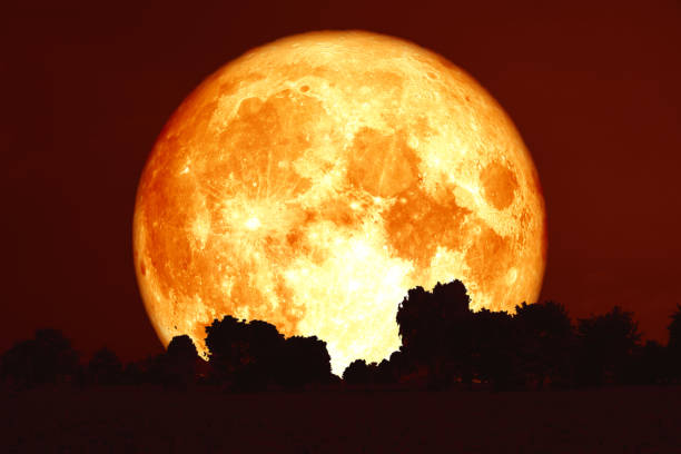 full harvest blood moon on red sky and silhouette trees stock photo