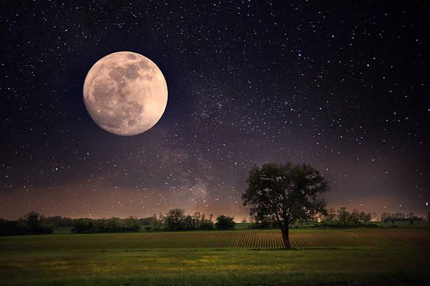 pleine lune et arbre solitaire - pleine lune photos et images de collection