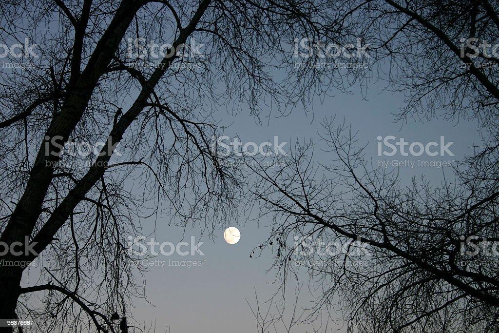 full moon and trees royalty-free stock photo