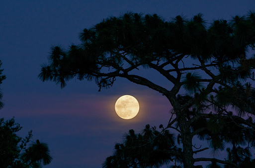 Full Moon as Clouds Pass By During Sunset Catching Purple Light in Orlando Florida USA