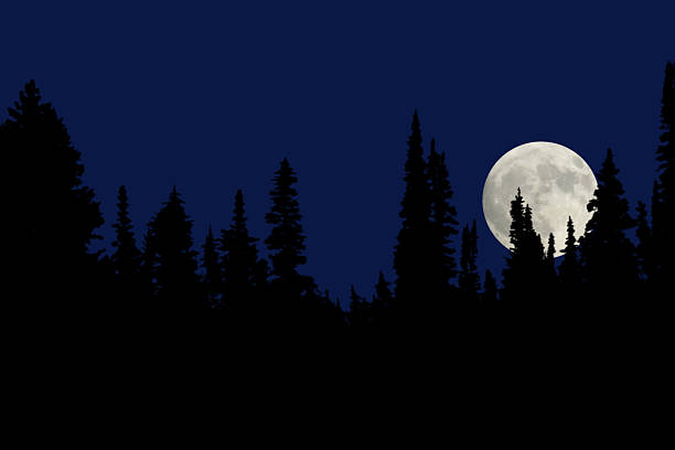 A full moon at night in the forest stock photo