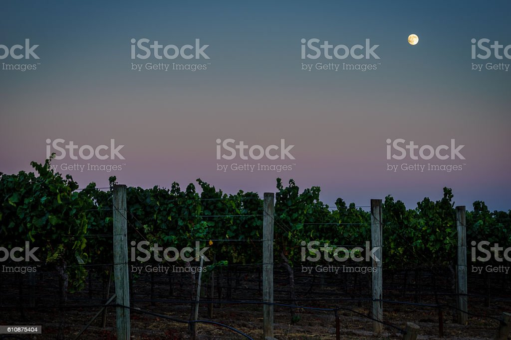 Full moon, colorful sky over Napa California vineyard at twilight stock photo