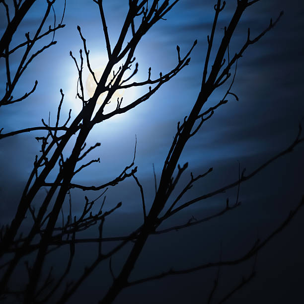 Full moon foggy dark night, naked leafless trees silhouettes moonlight stock photo