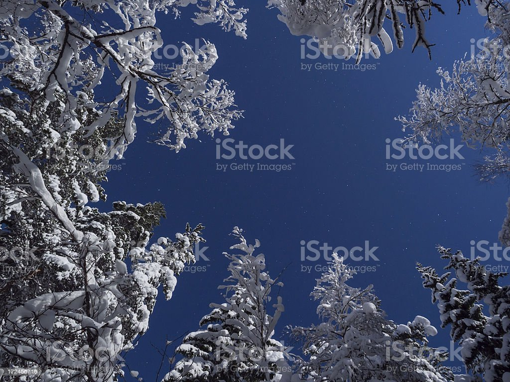 full moon forest royalty-free stock photo