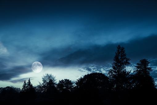 Full moon in blue sky over dark forest